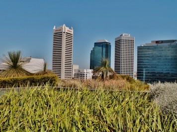 Low grass on a rooftop garden overlooking Perth in WA