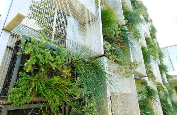 A spectacular wall garden of mesh and plants in alternate rows