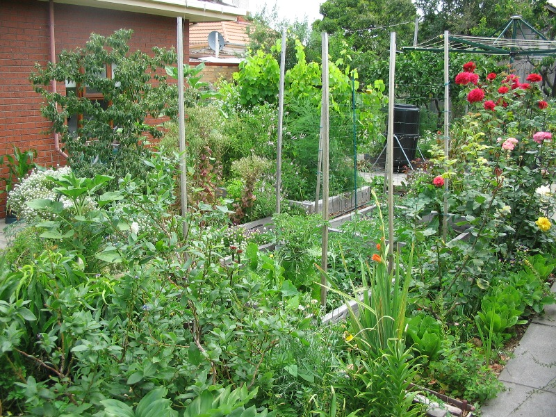 My Garden | Deep Green Permaculture on Backyard Permaculture Design id=41441