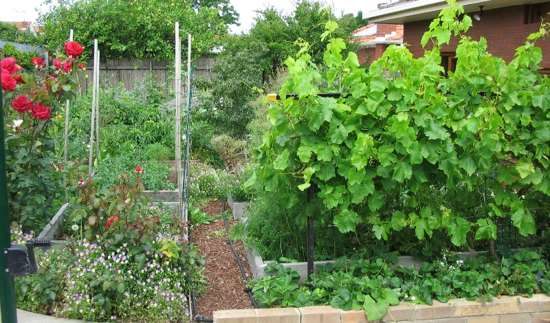 My Garden | Deep Green Permaculture on Backyard Permaculture Design id=89466
