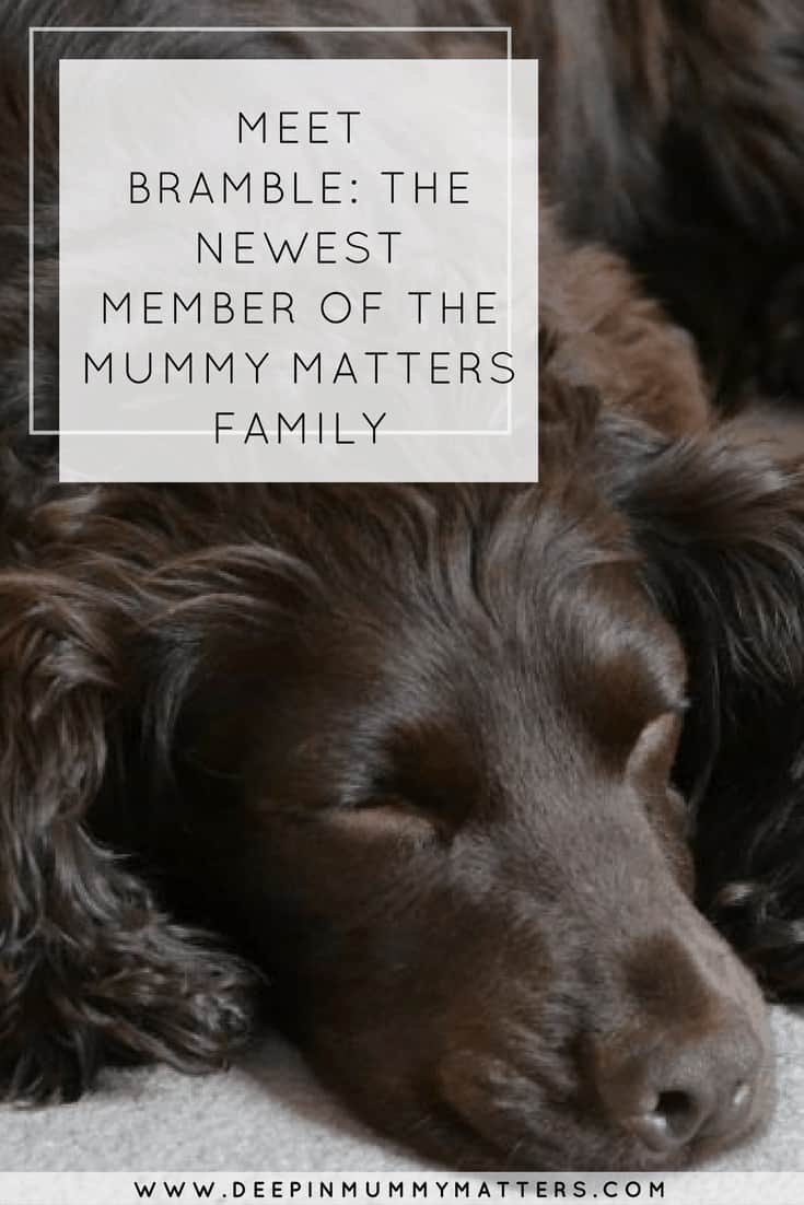 MEET BRAMBLE: THE NEWEST MEMBER OF THE MUMMY MATTERS FAMILY