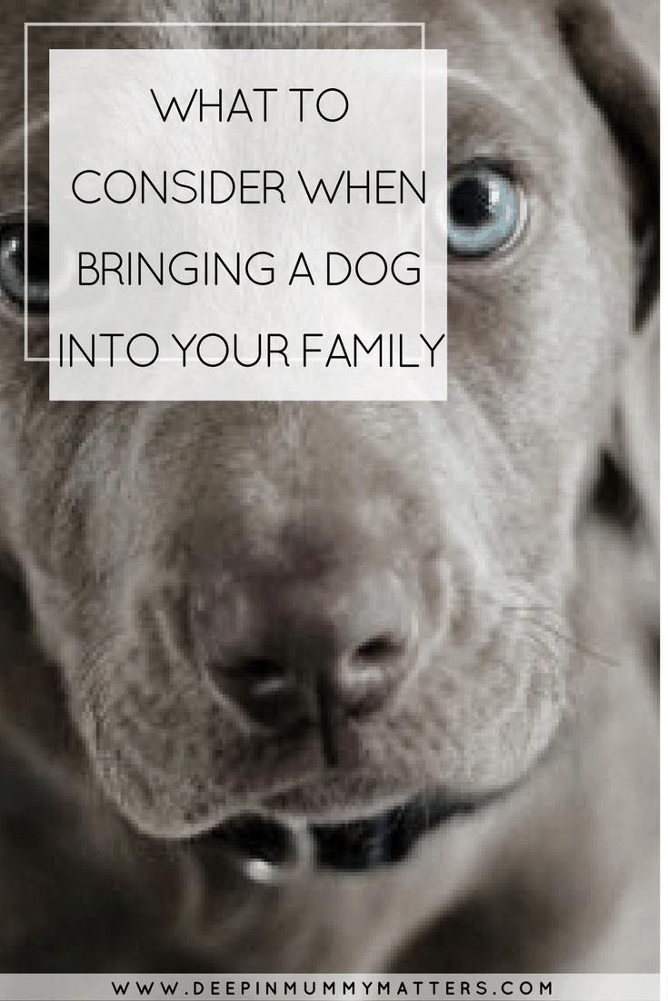 WHAT TO CONSIDER WHEN BRINGING A DOG INTO YOUR FAMILY