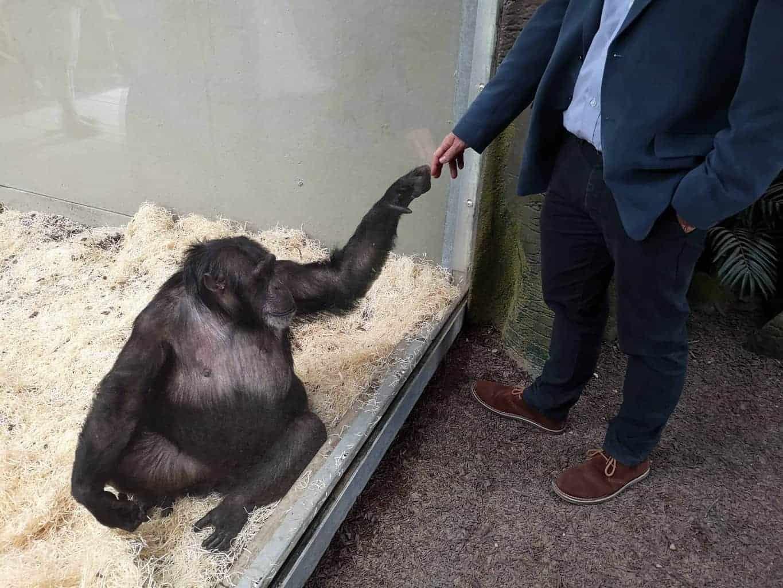 Chimpanzee Eden