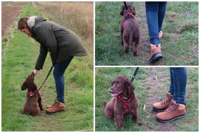 Millets Dog Walking Essentials5