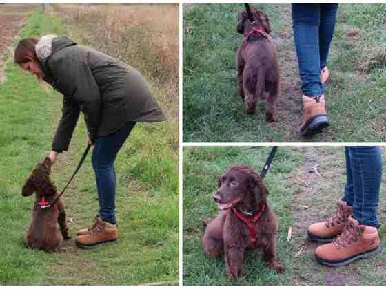 Millets Dog Walking Essentials5