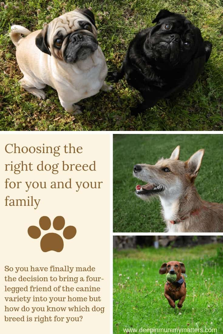 Choosing the right dog breed for you and your family