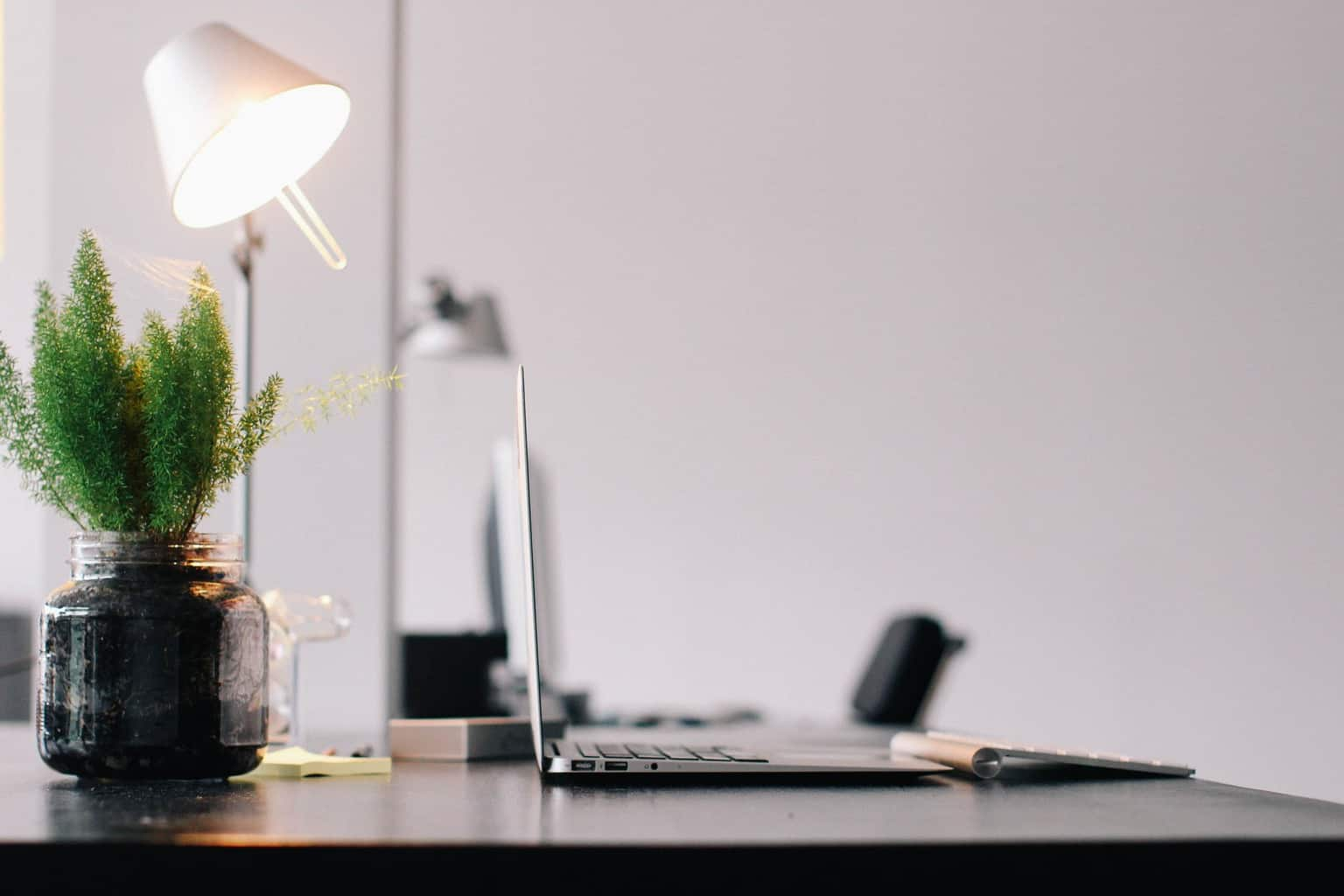 How To Maintain Office Indoor Plants In Winter