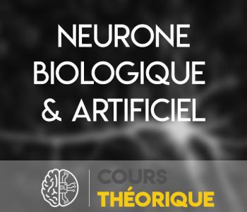 neurone biologique et artificiel