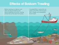 Effects of bottom trawling showing destriction of seabed and resuspension of sediments