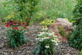 Perennial flowers in bloom