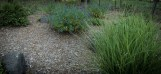 Accent grasses and flowering shrubs