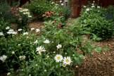Perennial flower details