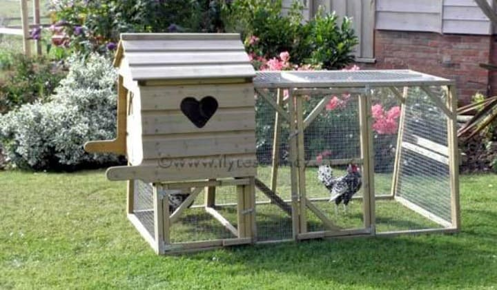 What is a chicken tractor and thoughts on having chickens Make your own hen house