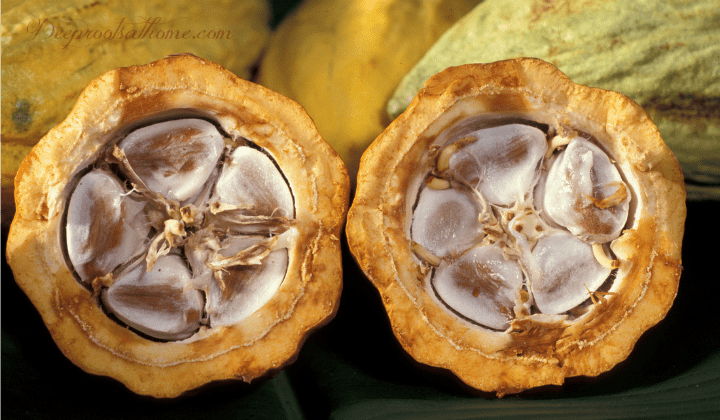 Cacao vs. Cocoa: What's The Difference?, cacao Pods, cacao beans, theobroma, superfood,