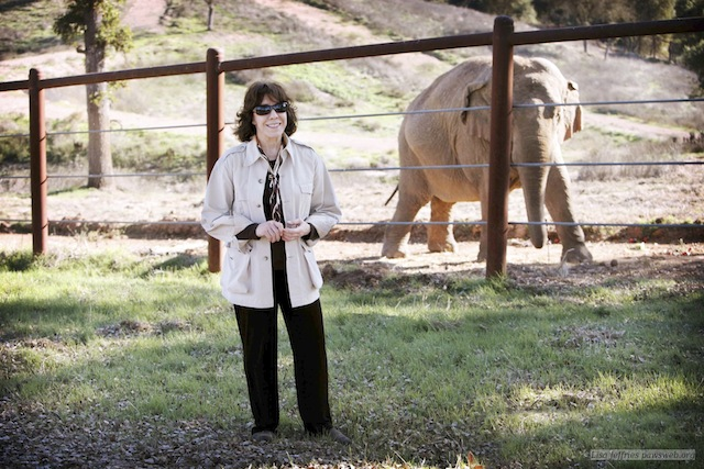 "This undated publicity photo released by courtesy of HBO shows narrator Lily Tomlin in the documentary film, ""An Apology to Elephants."" The film is an unabashed polemic, calling for improved treatment of elephants in zoos and an end to the use of the animals as entertainment, which the film contends must invariably involve abuse. (AP Photo/HBO, Lisa Jeffries/pawsweb.org)"
