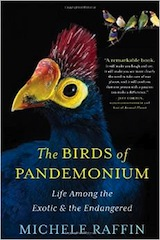 birds-of-pandemonium