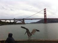 Golden Gate from Crissy Field