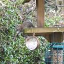 bird watch 1 - 4