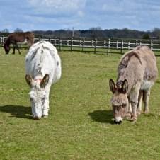 donkeys - 21