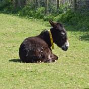 donkeys - 26