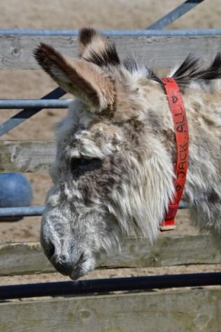 donkeys - 27