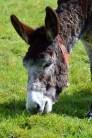donkeys - 4