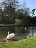 Oxford March 2017 - 75