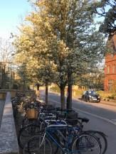 Oxford March 2017 - 83