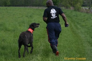 Photo of Deerhound running with owner by Cynthia Crysdale