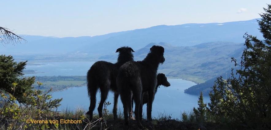 Photo by Verena von Eichborn of Deerhounds.