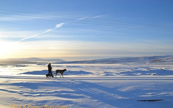 Photo of Deerhound and Whippet in Røros, Norway.