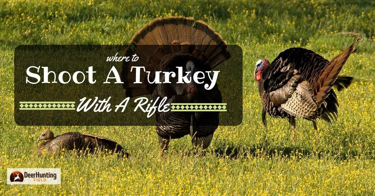where to shoot a turkey with a rifle