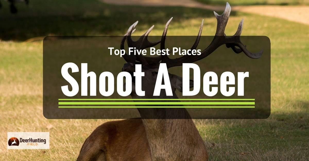Top 5 Best Places To Shoot A Deer