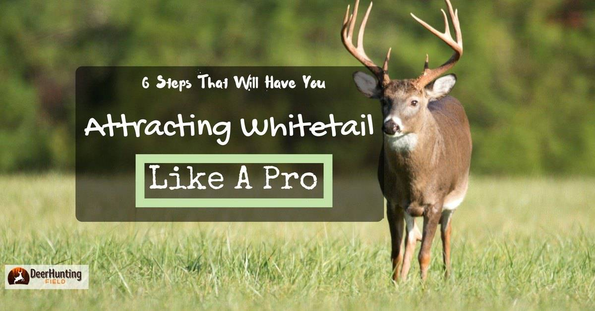 how to attract deer fast