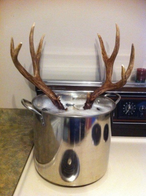 How To Bleach A Deer Skull 5 Simple Steps To A Beautiful
