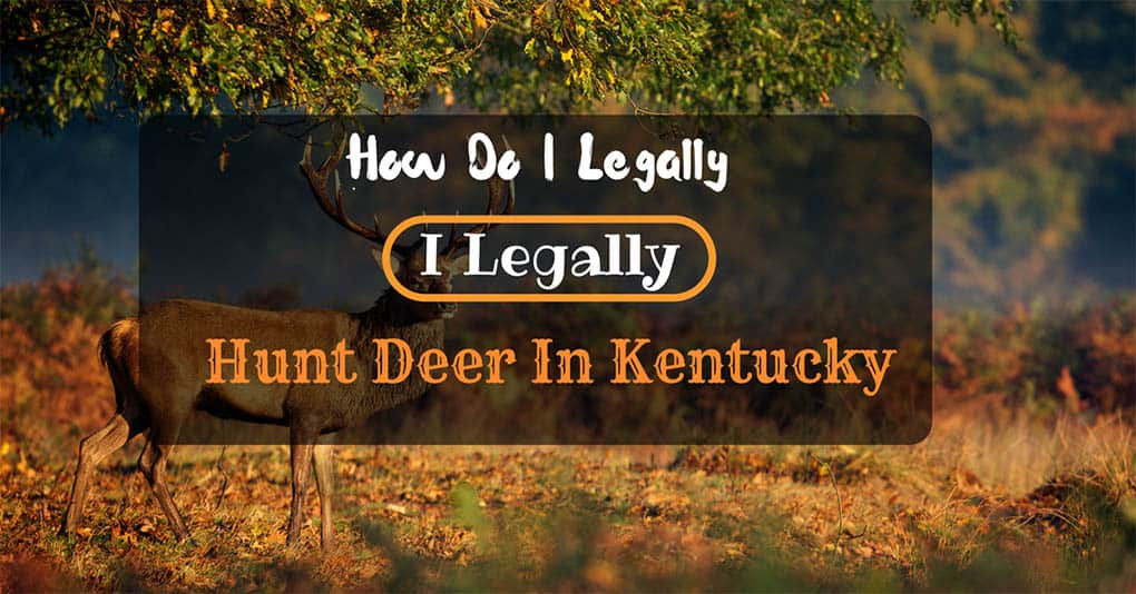 kentucky-deer-hunting