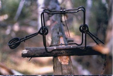 Conibear Traps
