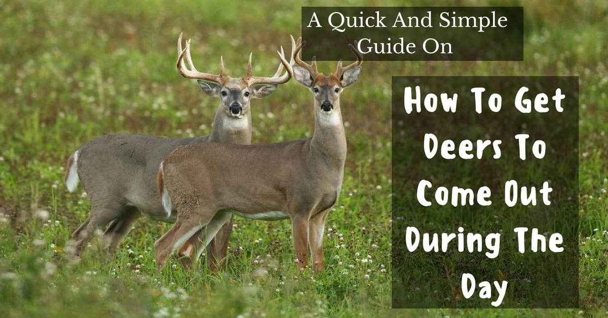 how to get deer to come out during the day