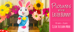 Pictures with the Easter Bunny @ Dees' Nursery
