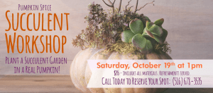Pumpkin Succulent Workshop @ Dee's Nursery