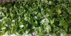 Fresh Methi leaves