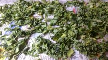 Drying methi leaves