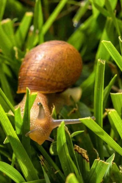 Print of a Snail Crawling through the Grass Photo