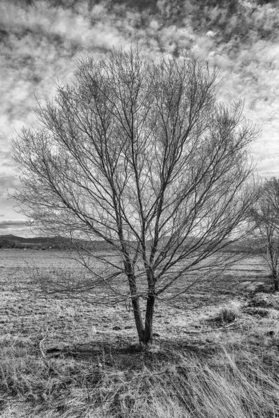 Print of a Wintered Tree along Highway 88 in Gardnerville Photo