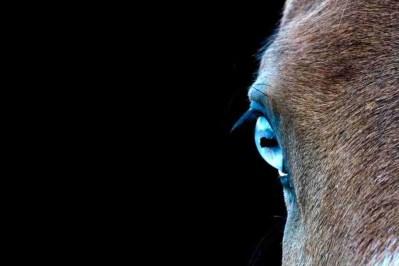 Print of a Heza Blue Eyed Horse in California Photo
