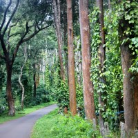 On the plantation trail – Kodagu woods
