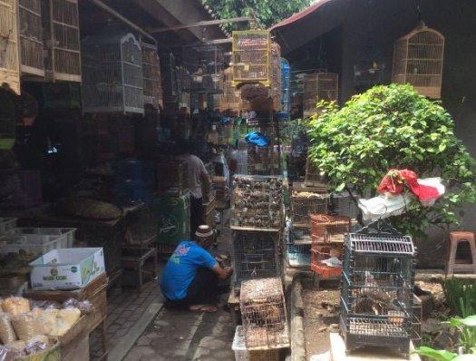 いろいろな鳥が売られている
