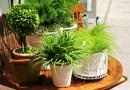 Комнатные цветы, которые полезно иметь в доме