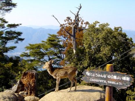 Daim au sommet de Itsukushima - mer intérieure de Seto - Japon