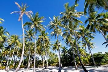 Cocoteraie, Bora-Bora